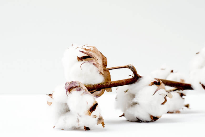 main characteristics cotton