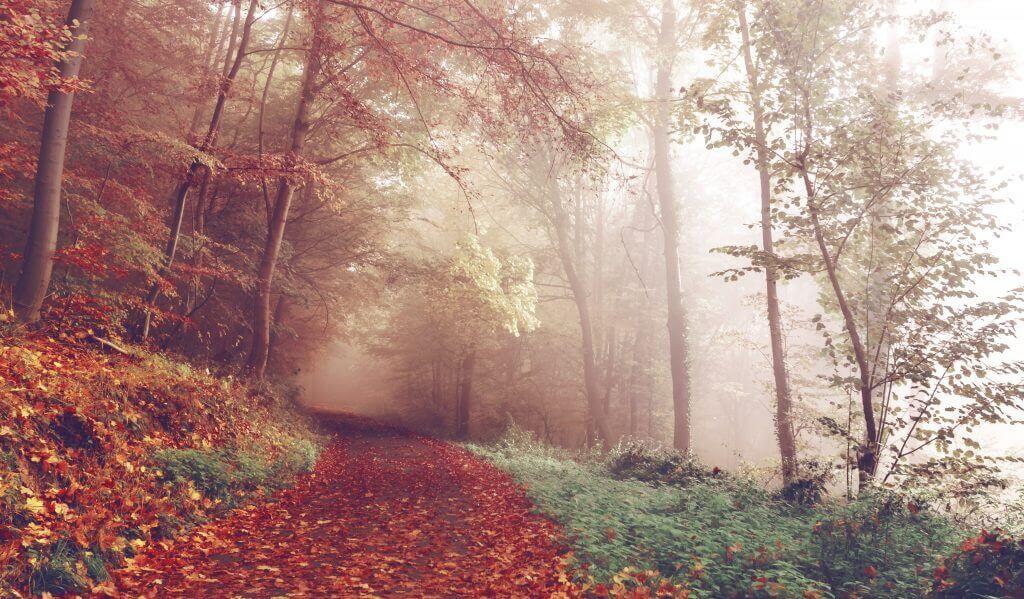 fall-autumn-cozy