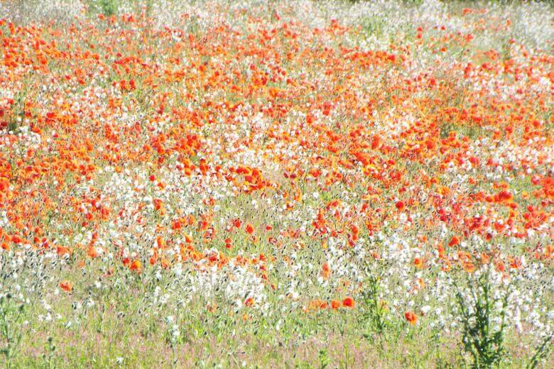 wildflower sustainability - Earth Day