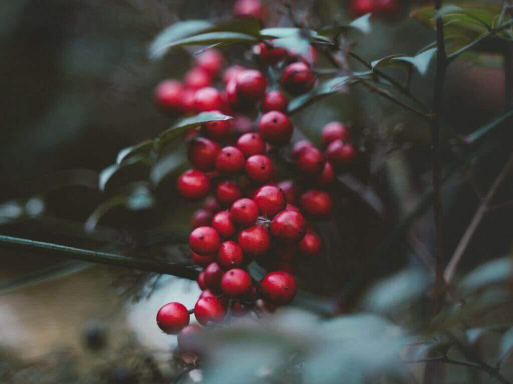 berry colours autumn linen
