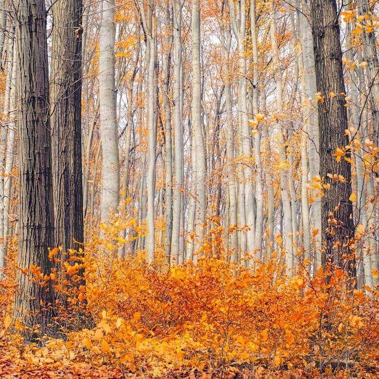 orange colour linen for fall