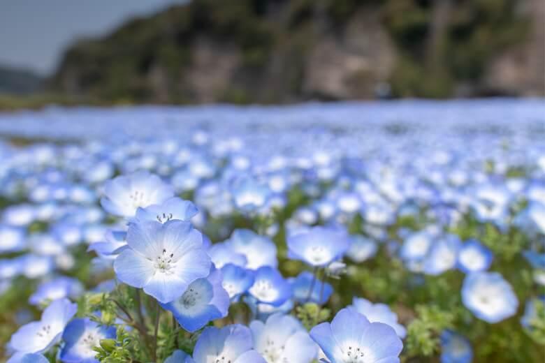 flax sustainable linen